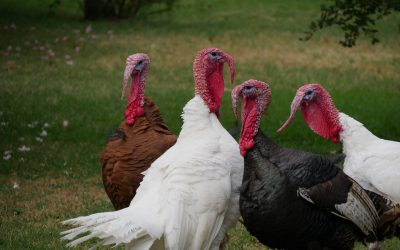 3 Reasons NOT to Be Thankful (but I still am)